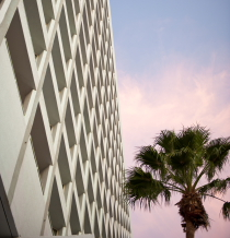 Hotel building and a palm tree in Aruba