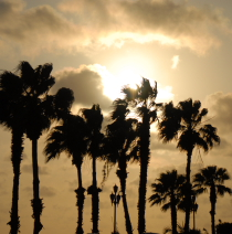Palm trees at sunset in Aruba